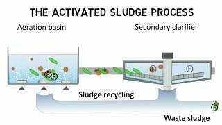 Activated sludge process and IFAS - Design rules + guideline