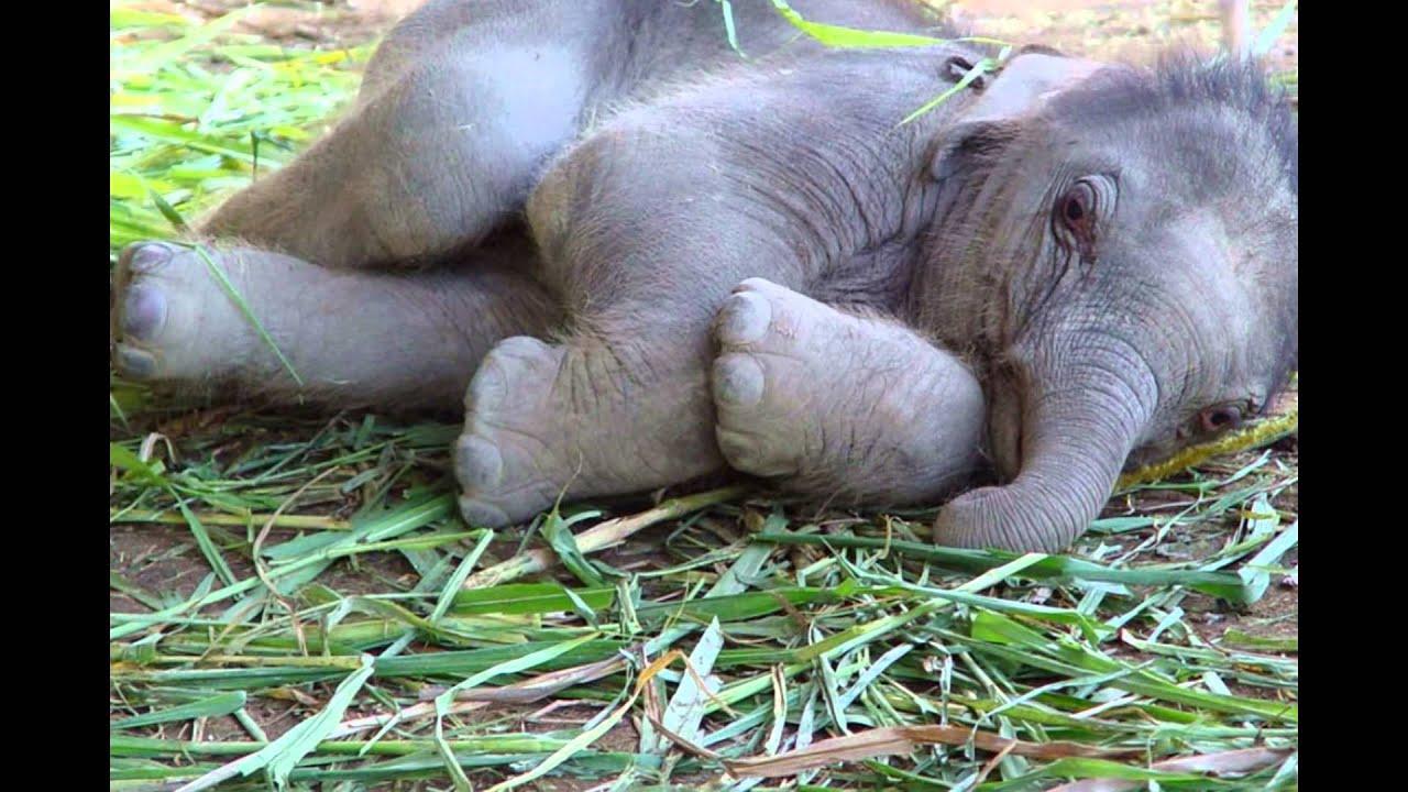 animals sweet baby cute adorable slideshow
