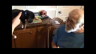 ЗЛОМУ ДЕДУ подарили щенка