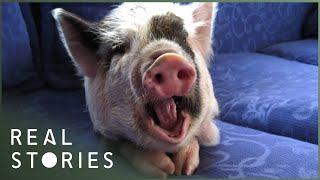 Painted Soldiers & New Zealand's Happiest Pig (Global Documentary) | Real Stories