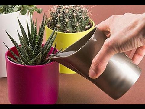 Как правильно поливать домашние цветы