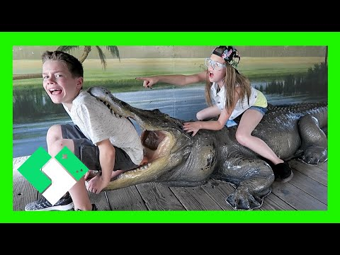 SURVIVING GATORLAND (Day 1484)