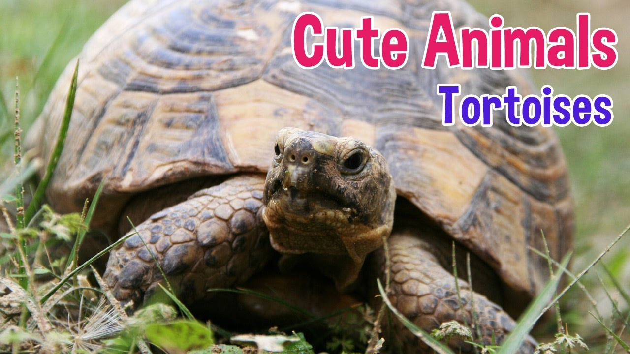 Uncategorized Tortoise Pictures For Kids tortoise animals for kids photos with classical music children by oxbridge baby