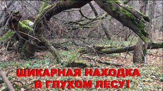 Шикарная находка в глухом лесу! Нереальный улов!)
