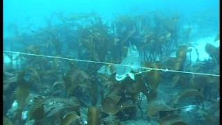 Underwater camera from longline fishing of cod