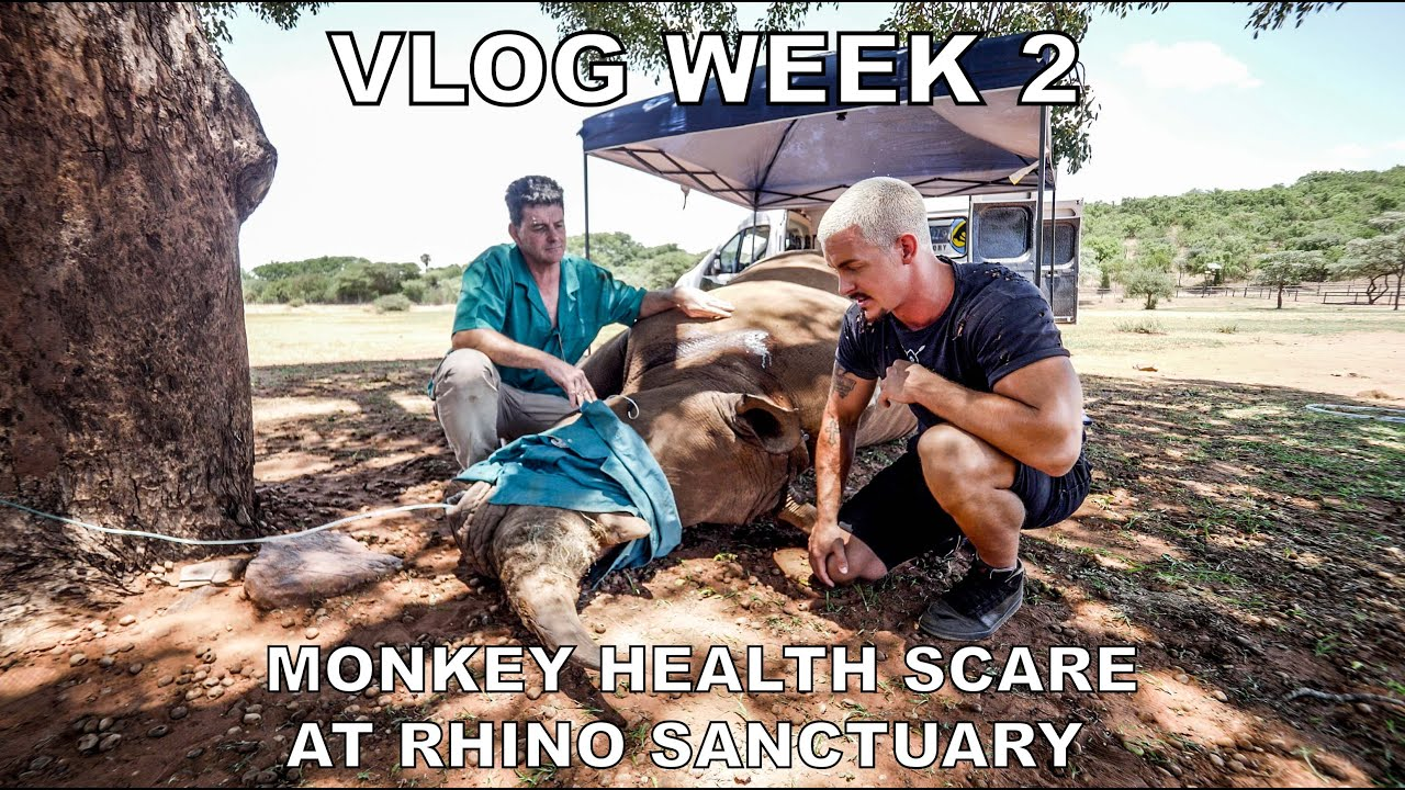 Dean Schneider VLOG week 2 - Bonding with the pride, Rhino Sanctuary and Monkey health scare.