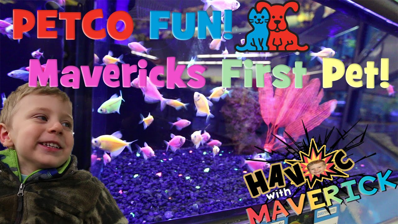 So much petco fun maverick 39 s very first pet a betta fish for How much are betta fish at petco