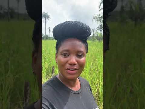 View of the farm, video 1 of 3  - Monrovia, Liberia