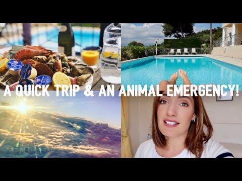 A QUICK TRIP & AN ANIMAL EMERGENCY! | VLOG | JAMIE GOURDON