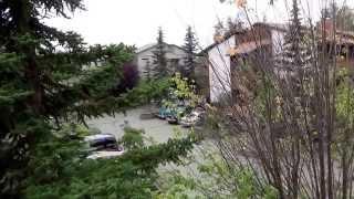 #390 США Аляска Анкоридж Варю борщ Сушу ягоды Шаль для мамы готова