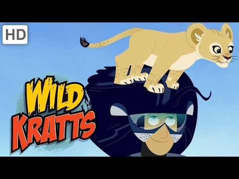 Wild Kratts - Lion King And Queen Of The Jungle | Kids Videos