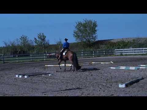 Gab Me A Cool One - All round Gelding for Sale
