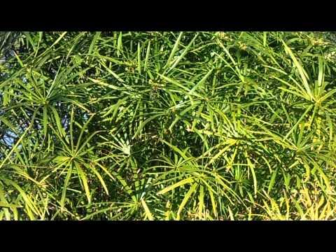 Домашние растения: Энциклопедия домашних растений