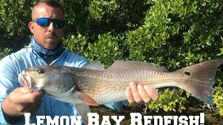 Lemon Bay Fishing