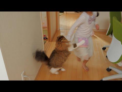 帰りを待っていたのにスルーされ娘に飛びつく猫