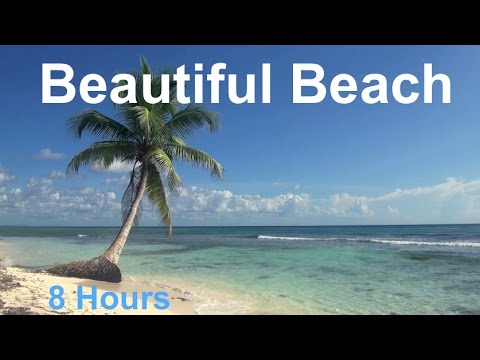 Relaxing 8 Hour Video of A Tropical Beach with Blue Sky White Sand and Palm Tree