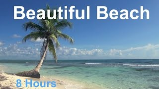 Relaxing 8 Hour Audio Of A Tropical Beach With Blue Sky White Sand And Palm Tree