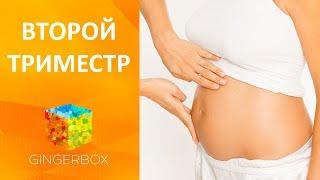 Второй триместр беременности // GINGERBOX