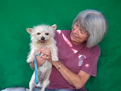 A5057818 Scottie | Norwich Terrier Mix
