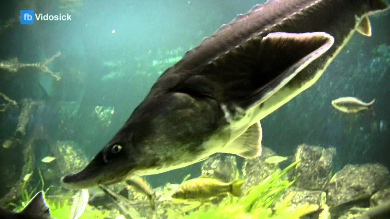 Где купить аквариумных рыбок? - YouTube