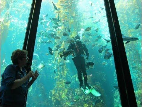 Monterey Bay Aquarium !!