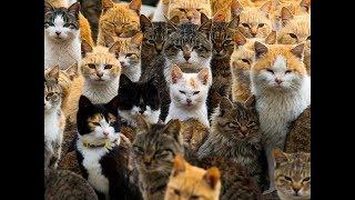 Singing hamsters. Весёлые хомяки.Собирать пазлы онлайн - Кошки и коты🐱🐱🐱