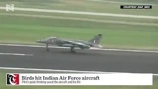 Watch: Indian Air Force pilot's unflappable reaction to mid-air bird strike
