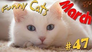 Прикольные коты 2014 Март #2