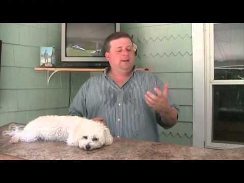 Dog Training - My Dog Runs Away - What Can I Do?