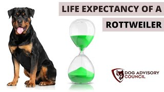 Life Expectancy of a Rottweiler (Common Causes of Death)