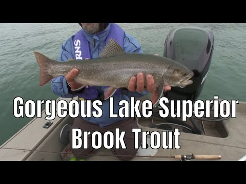Gorgeous Lake Superior Brook Trout  | Fish'n Canada