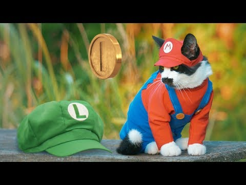 SUPER MARIO CAT BROS.