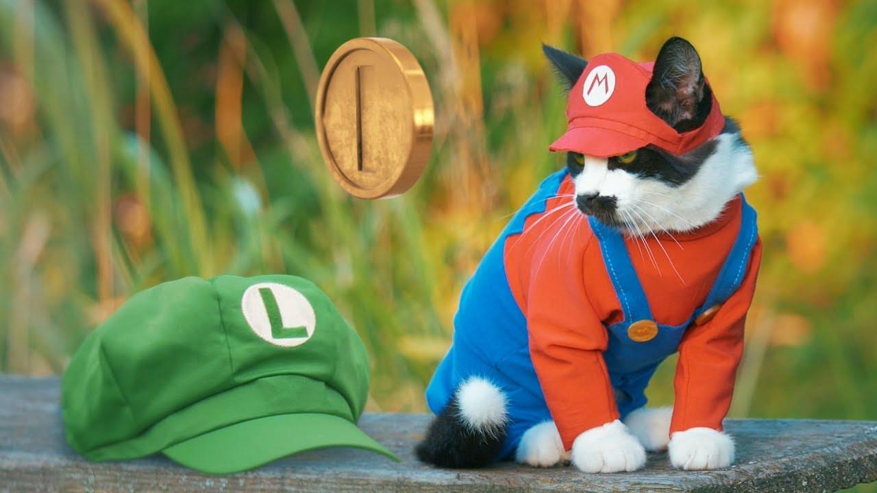 Super Mario Cat Bros