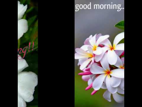 5 Good Morning Pics With Flowers 💐 ☺