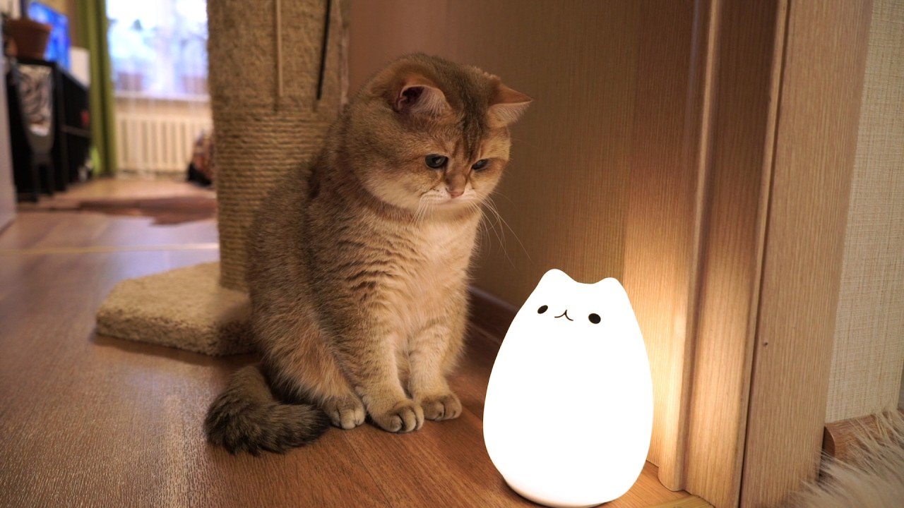 cat lamp  u0026 hosico
