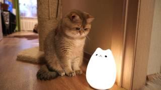 アイドルキャットのホシコさんと猫型LEDランプ、夢の共演