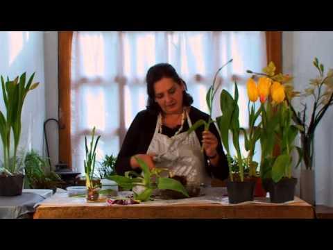 cómo conservar tulipanes después de su floración - youtube