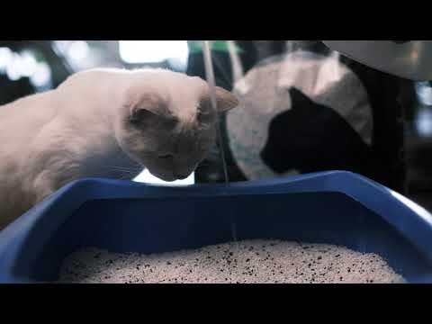 Catmania cat litter