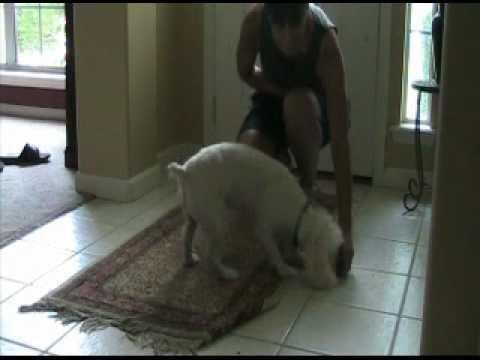 Positive Dog Training In Jacksonville, FL - Teaching Sit To Greet