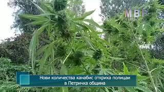 Нови количества канабис откриха полицаи в Петричка община