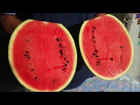 วิธีเลือกแตงโม สีแดง เนื้อแน่น หวานๆ