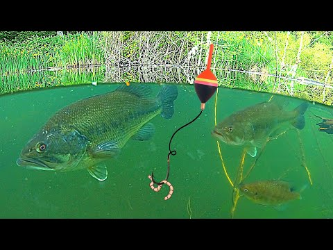 UNDERWATER FISHING!!! Big BASS, And Bluegill Catch & Cook!