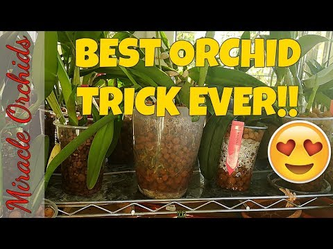 Best trick for rapid orchid growth during winter! | Growing orchids on heat mat | Winter orchid care