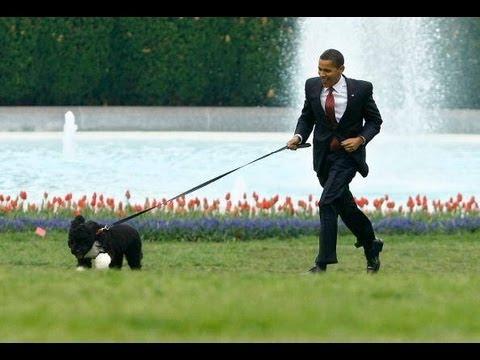 Obama Values Dog Over Payroll Tax Cut - McCain