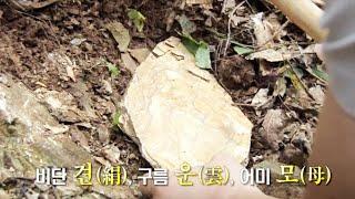 만성피로에 특효! '견운모'를 아시나요? @SBS 생활…