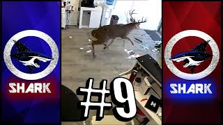 Ghetto Animal Voiceover Compilation #9