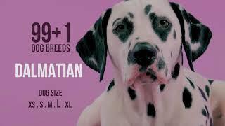 Dalmatian / 99+1 Dog Breeds