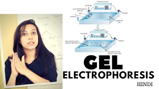 Gel Electrophoresis | Agarose Gel Electrophoresis Lab Procedure