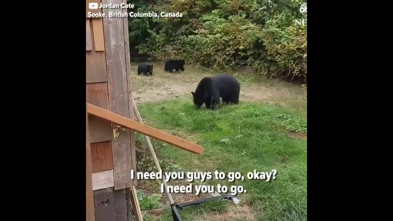 How to get rid of a bear in the garden Looking for ways 24