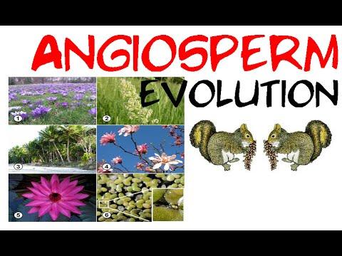 Angiosperm evolution
